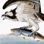 osprey-rp2