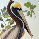 pelican-princeton2
