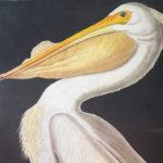 white-pelican-princeton2