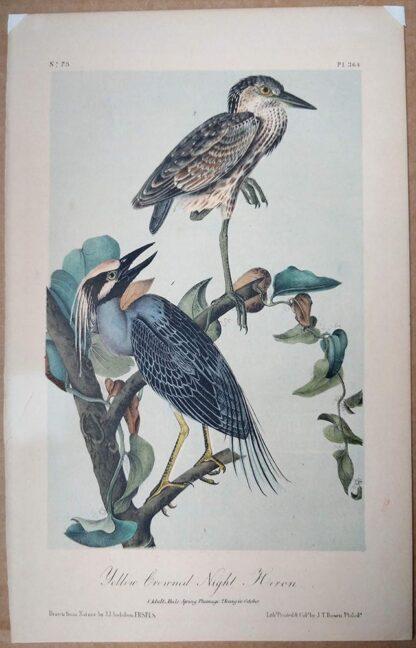 Second edition Audubon Octavo Print of the Yellow Crowned Night Heron