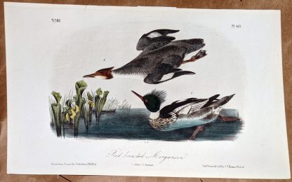 Audubon Octavo print original - Red Breasted Merganser, plate 412