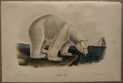 Original Polar Bear lithograph by John J Audubon