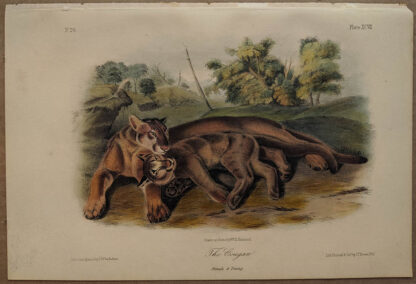 Original Cougar, Female & Young, lithograph by John J Audubon
