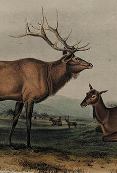 Original Octavo Edition - Quadrupeds of North America