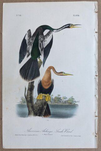 Original American Anhinga Snake Bird lithograph by John J Audubon