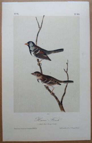 Audubon Octavo 2nd Edition of the Harris' Finch, plate 484