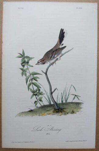 Audubon Octavo 1st Edition Lark Bunting, plate 158