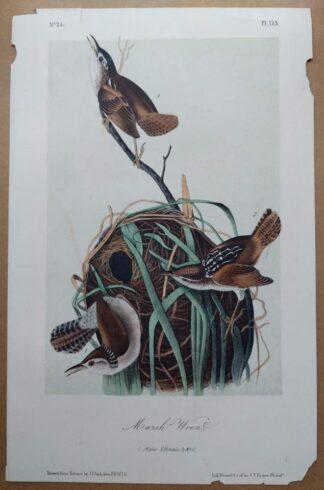 Audubon Octavo print of the Marsh Wren plate 123