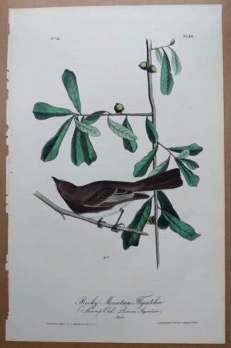 Audubon Octavo 1st Edition, Rocky Mountain Flycatcher, plate 60