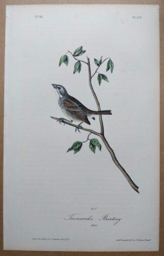 Audubon Octavo 1st Edition of Townsend's Bunting, plate 157