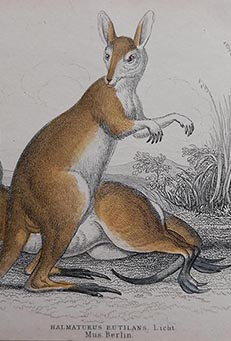 Mammals from The Naturalist's LIbrary by Sir William Jardine & W.H. Lizars