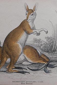 Mammals from Jardine's Naturalist's Library - Original antique prints