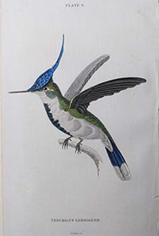 Birds from The Naturalist's Library by Sir William Jardine & W.H. Lizars