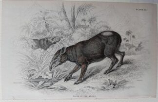 Naturalist's Library antique print of Tapir of the Andes, by Sir William Jardine and engraver W.H. Lizars