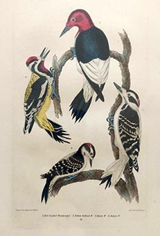 Alexander Wilson - American Ornithology