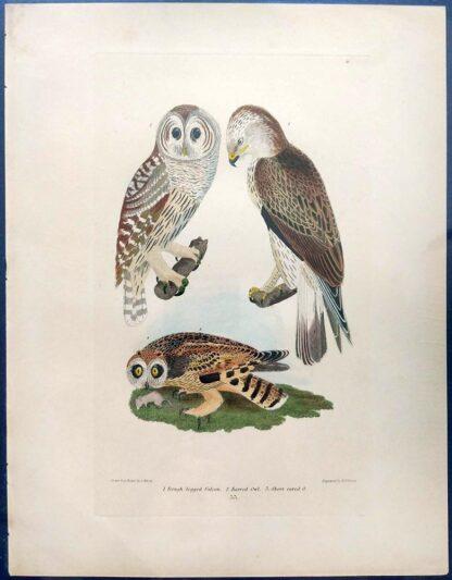 Original Alexander Wilson print of Rough-legged FAlcon, Barred Owl, Short eared Owl from American Ornithology, 1876 edition