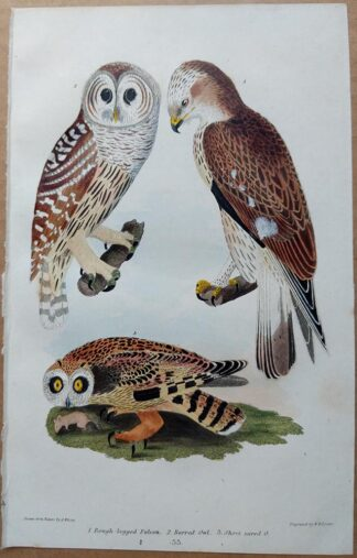Plate 33 of the Rough-legged Falcon, Barred Owl, Short Eared Owl from American Ornithology by Alexander Wilson, 1832