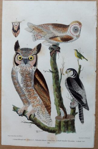 Plate 45 of the Great-horned Owl, Barn Owl from American Ornithology by Alexander Wilson, 1832