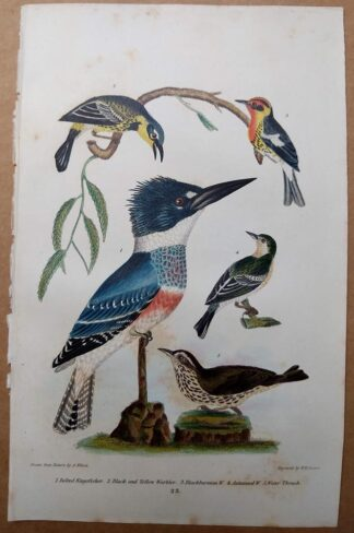 Antique print, plate 23, from 1832 of Belted Kingfisher, Warbler, Thrush from Alexander Wilson's American Ornithology