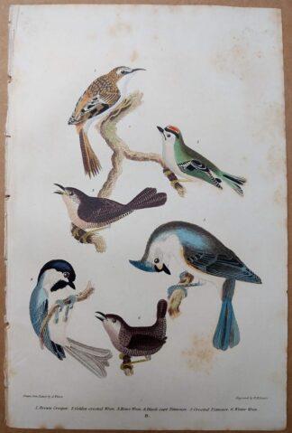 Original antique print from American Ornithology by Alexander Wilson, 1832 - Brown Creeper, Golden-crested Wren, House Wren, Titmouse