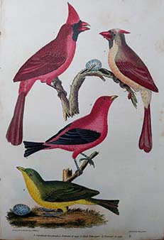 Alexander Wilson - Original American Ornithology